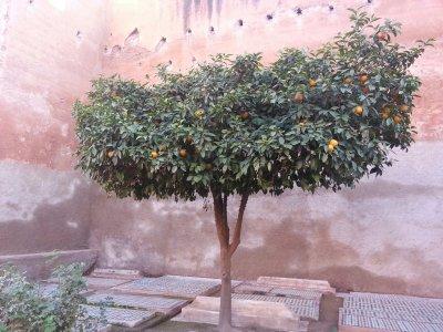 Marrakech331693_394853113929568_1601736574_o